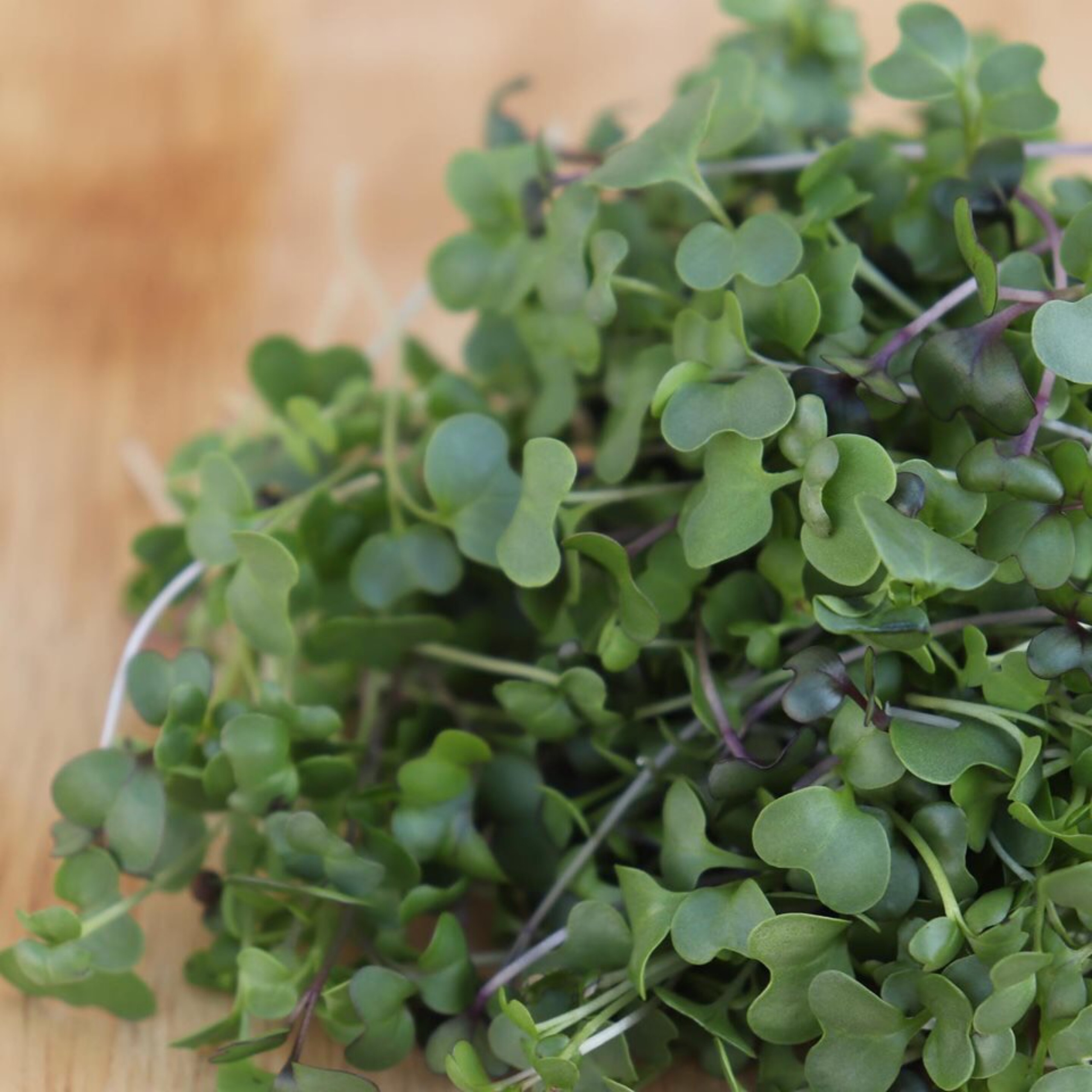 Spicy Salad Mix Microgreens