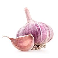 Purple Garlic