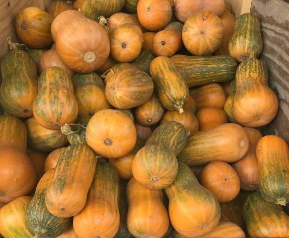 Honeynut