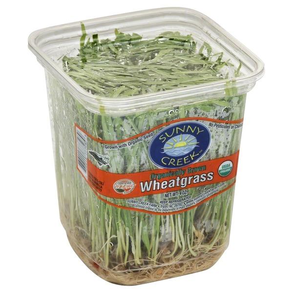 Sunny Creek Wheat Grass