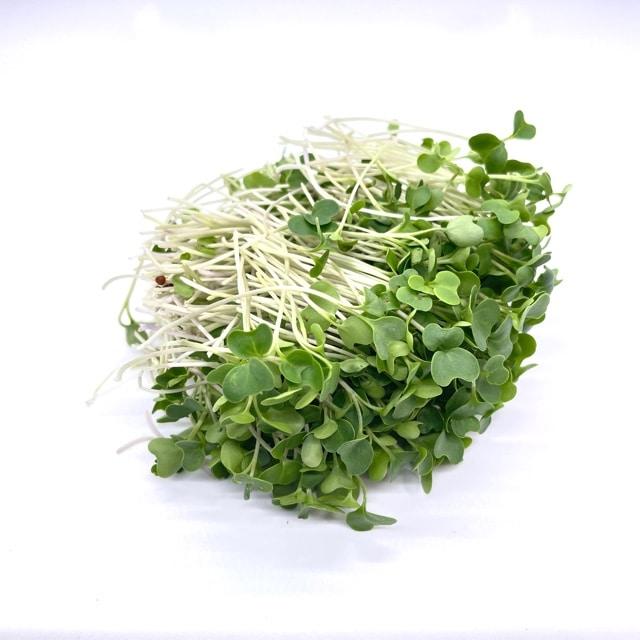 Waltham Broccoli